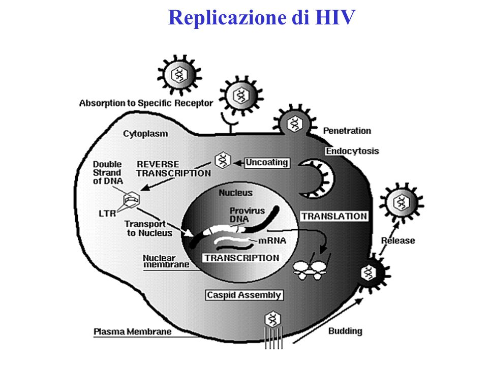Replicazione di HIV