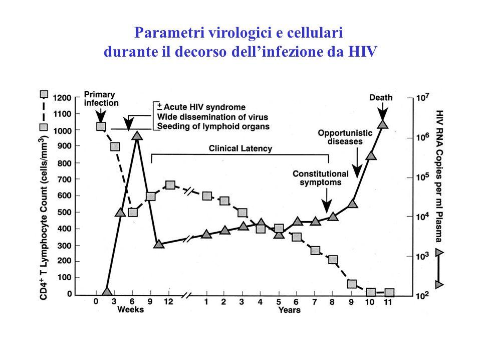 Parametri virologici e cellulari durante il decorso dell'infezione da HIV