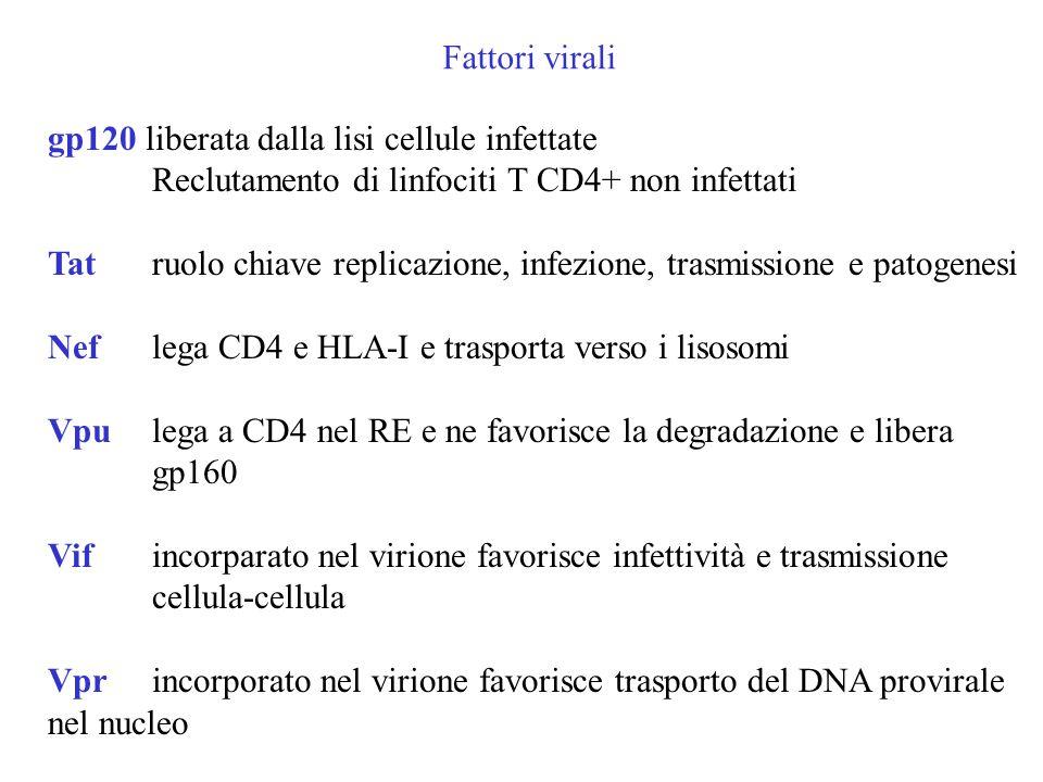 Fattori virali gp120 liberata dalla lisi cellule infettate Reclutamento di linfociti T CD4+ non infettati Tat ruolo chiave replicazione, infezione, trasmissione e patogenesi Nef lega CD4 e HLA-I e trasporta verso i lisosomi Vpu lega a CD4 nel RE e ne favorisce la degradazione e libera gp160 Vif incorparato nel virione favorisce infettività e trasmissione cellula-cellula Vprincorporato nel virione favorisce trasporto del DNA provirale nel nucleo