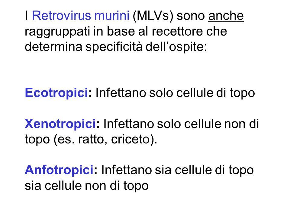 I Retrovirus murini (MLVs) sono anche raggruppati in base al recettore che determina specificità dell'ospite: Ecotropici: Infettano solo cellule di topo Xenotropici: Infettano solo cellule non di topo (es.