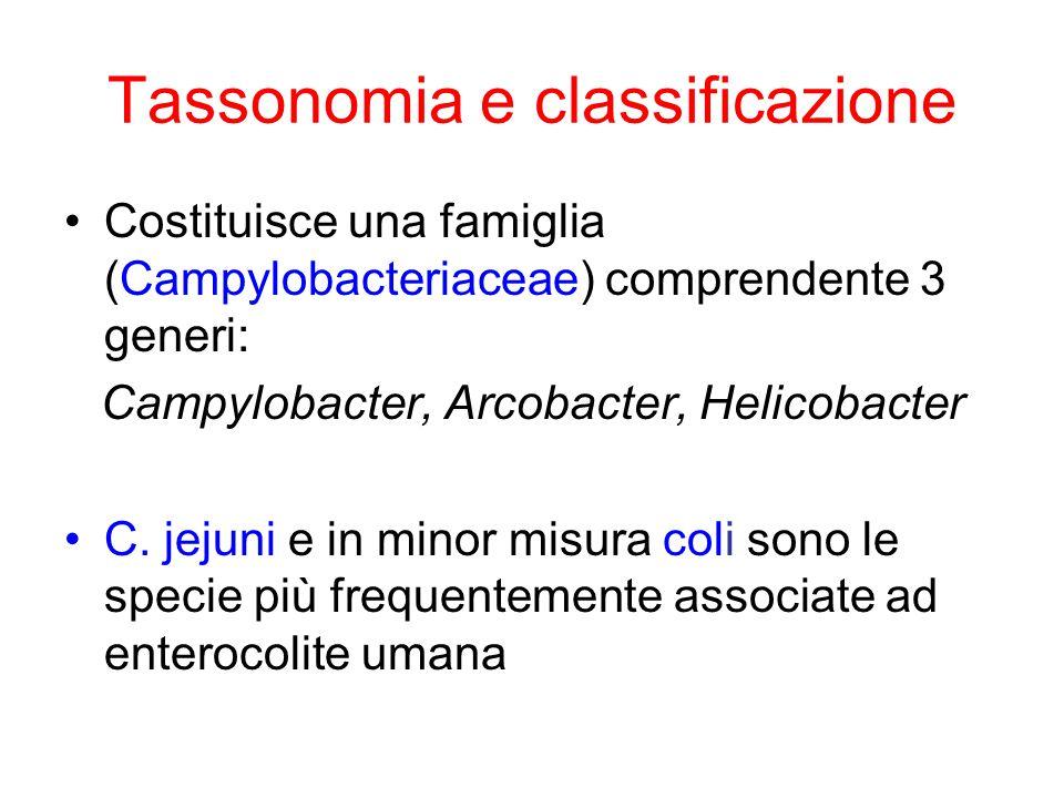 Tassonomia e classificazione Costituisce una famiglia (Campylobacteriaceae) comprendente 3 generi: Campylobacter, Arcobacter, Helicobacter C.