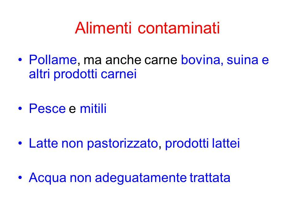 Alimenti contaminati Pollame, ma anche carne bovina, suina e altri prodotti carnei Pesce e mitili Latte non pastorizzato, prodotti lattei Acqua non adeguatamente trattata