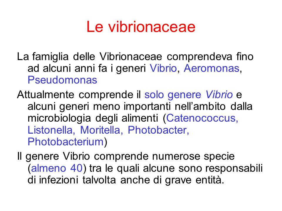 Le vibrionaceae La famiglia delle Vibrionaceae comprendeva fino ad alcuni anni fa i generi Vibrio, Aeromonas, Pseudomonas Attualmente comprende il solo genere Vibrio e alcuni generi meno importanti nell'ambito dalla microbiologia degli alimenti (Catenococcus, Listonella, Moritella, Photobacter, Photobacterium) Il genere Vibrio comprende numerose specie (almeno 40) tra le quali alcune sono responsabili di infezioni talvolta anche di grave entità.