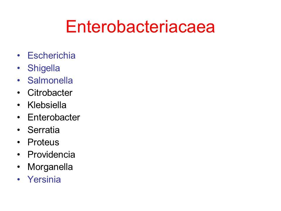 Enterobacteriacaea Escherichia Shigella Salmonella Citrobacter Klebsiella Enterobacter Serratia Proteus Providencia Morganella Yersinia