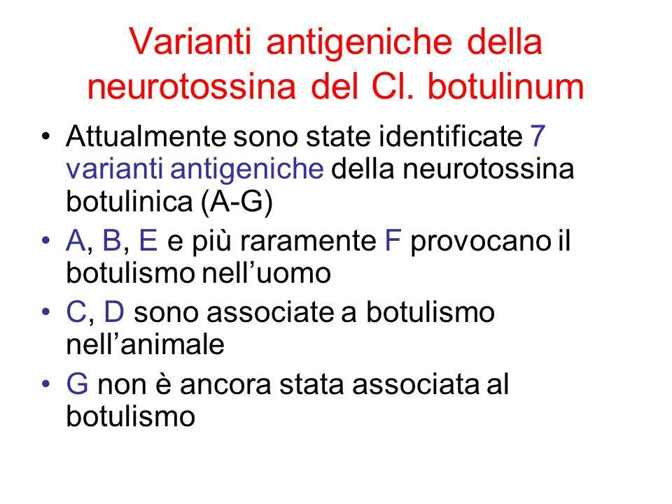 Varianti antigeniche della neurotossina del Cl.
