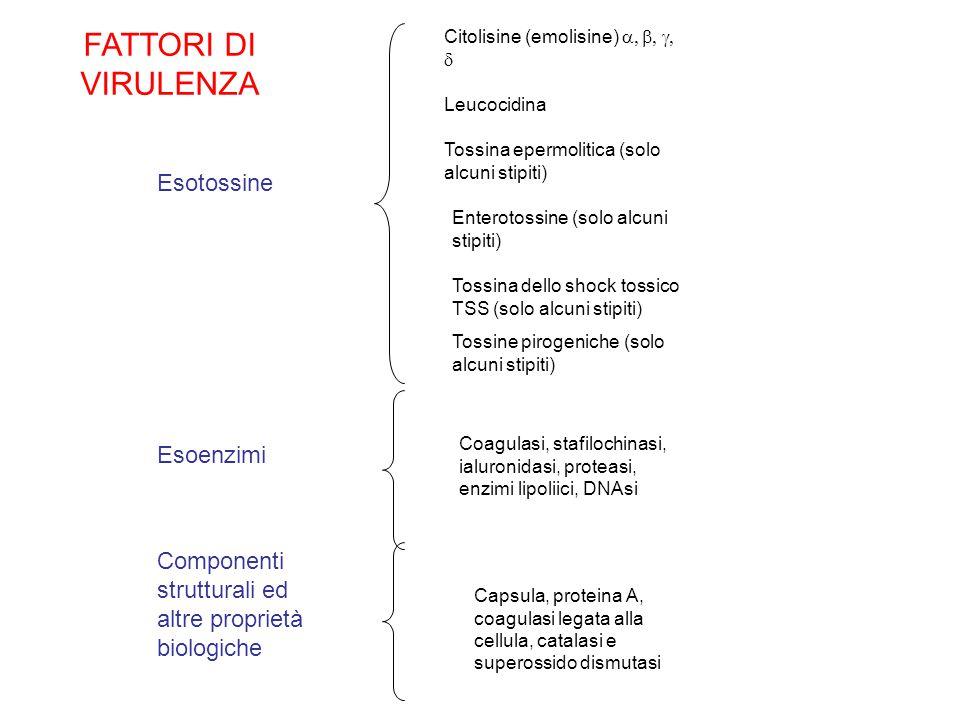 Esotossine Esoenzimi Componenti strutturali ed altre proprietà biologiche Citolisine (emolisine)   Leucocidina Tossina epermolitica (solo alcuni stipiti) Enterotossine (solo alcuni stipiti) Tossina dello shock tossico TSS (solo alcuni stipiti) Tossine pirogeniche (solo alcuni stipiti) Coagulasi, stafilochinasi, ialuronidasi, proteasi, enzimi lipoliici, DNAsi Capsula, proteina A, coagulasi legata alla cellula, catalasi e superossido dismutasi FATTORI DI VIRULENZA