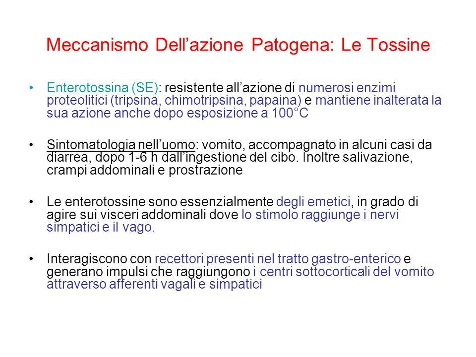 Meccanismo Dell'azione Patogena: Le Tossine Enterotossina (SE): resistente all'azione di numerosi enzimi proteolitici (tripsina, chimotripsina, papaina) e mantiene inalterata la sua azione anche dopo esposizione a 100°C Sintomatologia nell'uomo: vomito, accompagnato in alcuni casi da diarrea, dopo 1-6 h dall'ingestione del cibo.