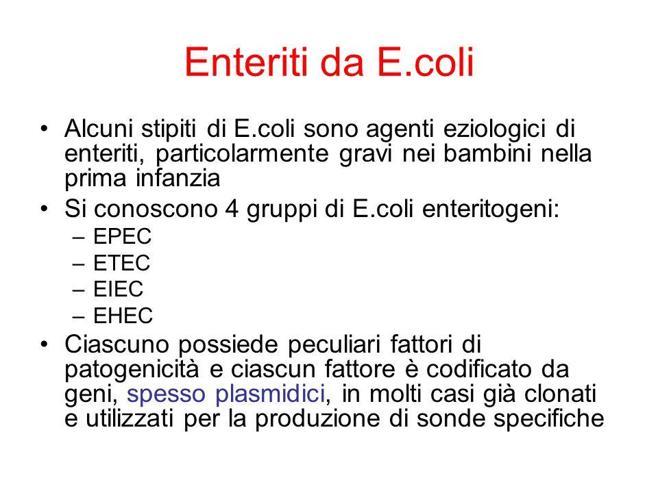 Enteriti da E.coli Alcuni stipiti di E.coli sono agenti eziologici di enteriti, particolarmente gravi nei bambini nella prima infanzia Si conoscono 4 gruppi di E.coli enteritogeni: –EPEC –ETEC –EIEC –EHEC Ciascuno possiede peculiari fattori di patogenicità e ciascun fattore è codificato da geni, spesso plasmidici, in molti casi già clonati e utilizzati per la produzione di sonde specifiche