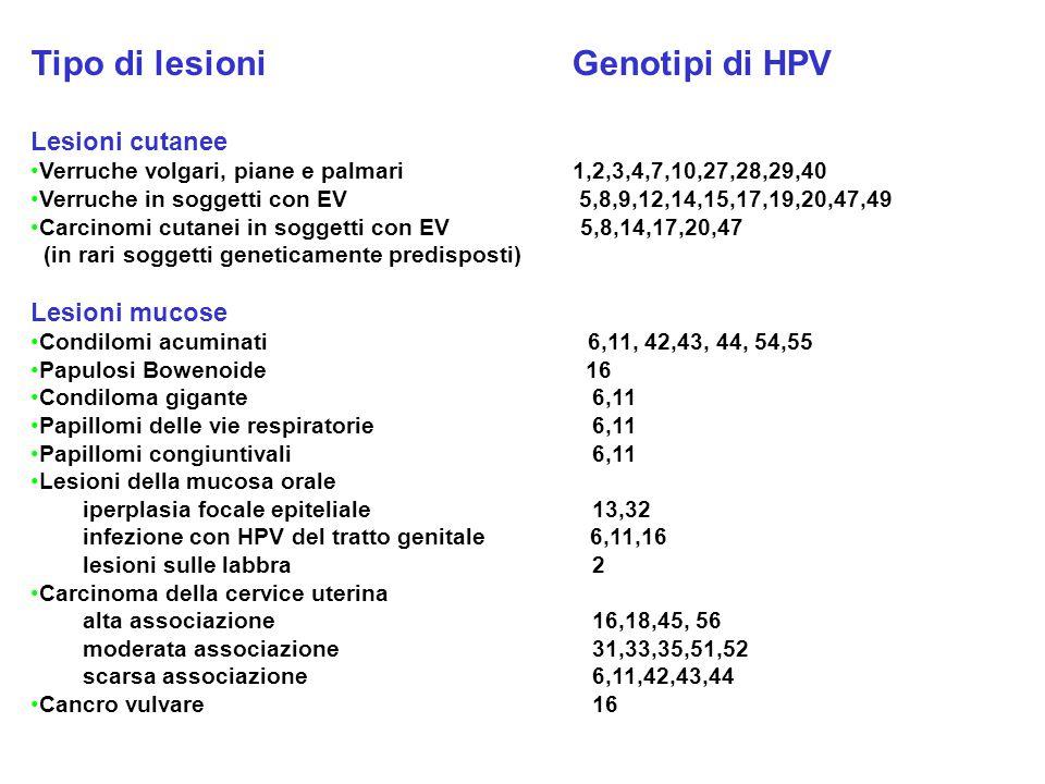 Tipo di lesioni Genotipi di HPV Lesioni cutanee Verruche volgari, piane e palmari 1,2,3,4,7,10,27,28,29,40 Verruche in soggetti con EV 5,8,9,12,14,15,