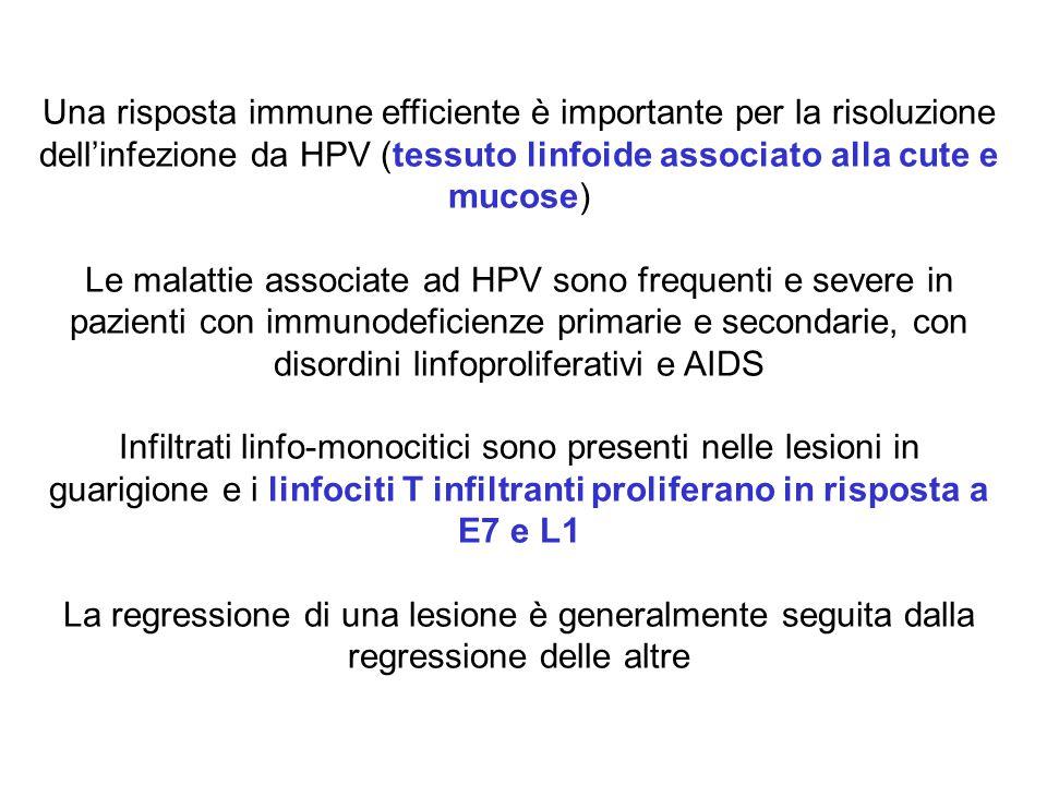 Una risposta immune efficiente è importante per la risoluzione dell'infezione da HPV (tessuto linfoide associato alla cute e mucose) Le malattie assoc