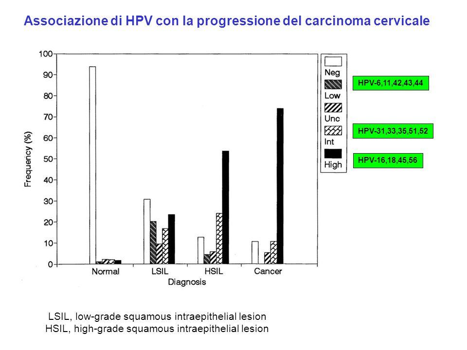 LSIL, low-grade squamous intraepithelial lesion HSIL, high-grade squamous intraepithelial lesion Associazione di HPV con la progressione del carcinoma