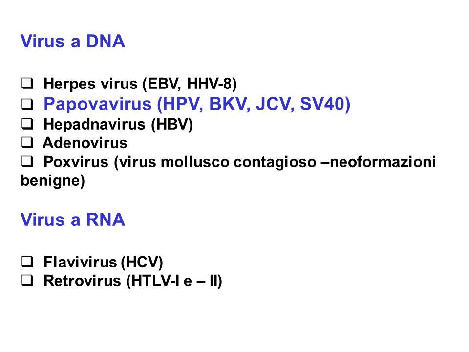 Virus a DNA  Herpes virus (EBV, HHV-8)  Papovavirus (HPV, BKV, JCV, SV40)  Hepadnavirus (HBV)  Adenovirus  Poxvirus (virus mollusco contagioso –n