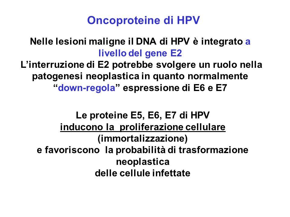 Le proteine E5, E6, E7 di HPV inducono la proliferazione cellulare (immortalizzazione) e favoriscono la probabilità di trasformazione neoplastica dell