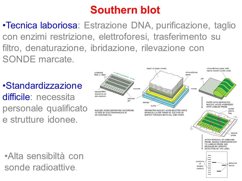 Southern blot Tecnica laboriosa: Estrazione DNA, purificazione, taglio con enzimi restrizione, elettroforesi, trasferimento su filtro, denaturazione,