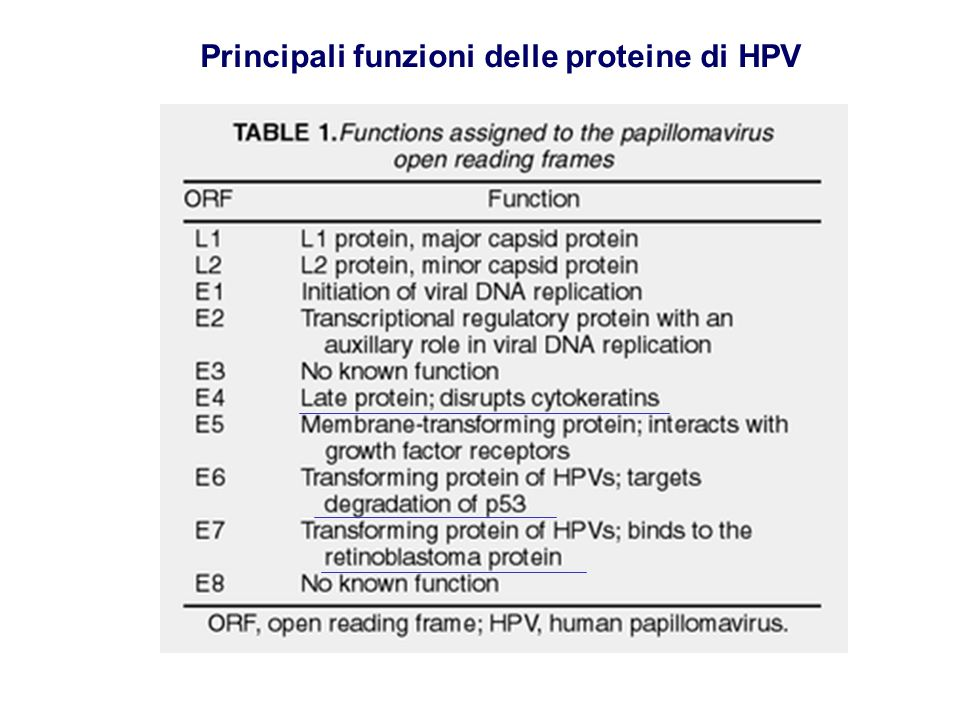 LSIL, low-grade squamous intraepithelial lesion HSIL, high-grade squamous intraepithelial lesion Associazione di HPV con la progressione del carcinoma cervicale HPV-6,11,42,43,44 HPV-31,33,35,51,52 HPV-16,18,45,56