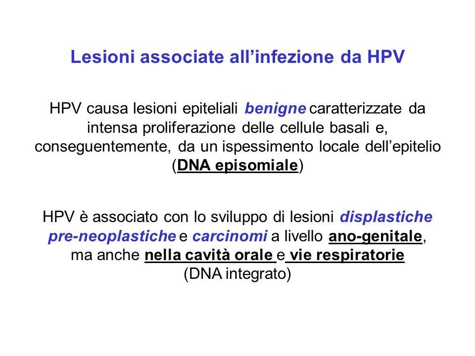 Tipo di lesioni Genotipi di HPV Lesioni cutanee Verruche volgari, piane e palmari 1,2,3,4,7,10,27,28,29,40 Verruche in soggetti con EV 5,8,9,12,14,15,17,19,20,47,49 Carcinomi cutanei in soggetti con EV 5,8,14,17,20,47 (in rari soggetti geneticamente predisposti) Lesioni mucose Condilomi acuminati 6,11, 42,43, 44, 54,55 Papulosi Bowenoide 16 Condiloma gigante 6,11 Papillomi delle vie respiratorie 6,11 Papillomi congiuntivali 6,11 Lesioni della mucosa orale iperplasia focale epiteliale 13,32 infezione con HPV del tratto genitale 6,11,16 lesioni sulle labbra 2 Carcinoma della cervice uterina alta associazione 16,18,45, 56 moderata associazione 31,33,35,51,52 scarsa associazione 6,11,42,43,44 Cancro vulvare 16