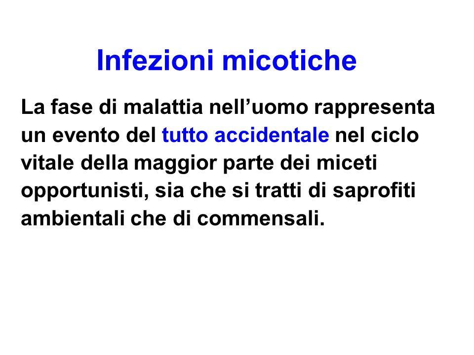 I Miceti dei generi Candida sp., Aspergillus sp.e Cryptococcus sp.