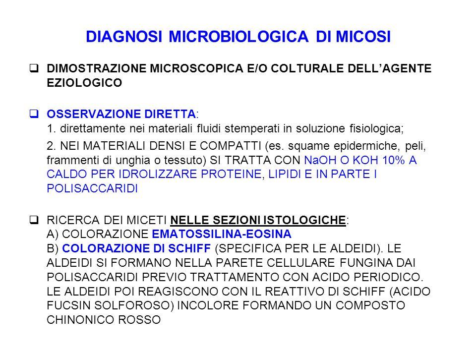 DIAGNOSI MICROBIOLOGICA DI MICOSI  DIMOSTRAZIONE MICROSCOPICA E/O COLTURALE DELL'AGENTE EZIOLOGICO  OSSERVAZIONE DIRETTA: 1. direttamente nei materi