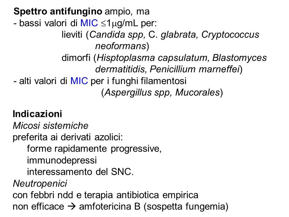 Spettro antifungino ampio, ma - bassi valori di MIC  1  g/mL per: lieviti (Candida spp, C. glabrata, Cryptococcus neoformans) dimorfi (Hisptoplasma