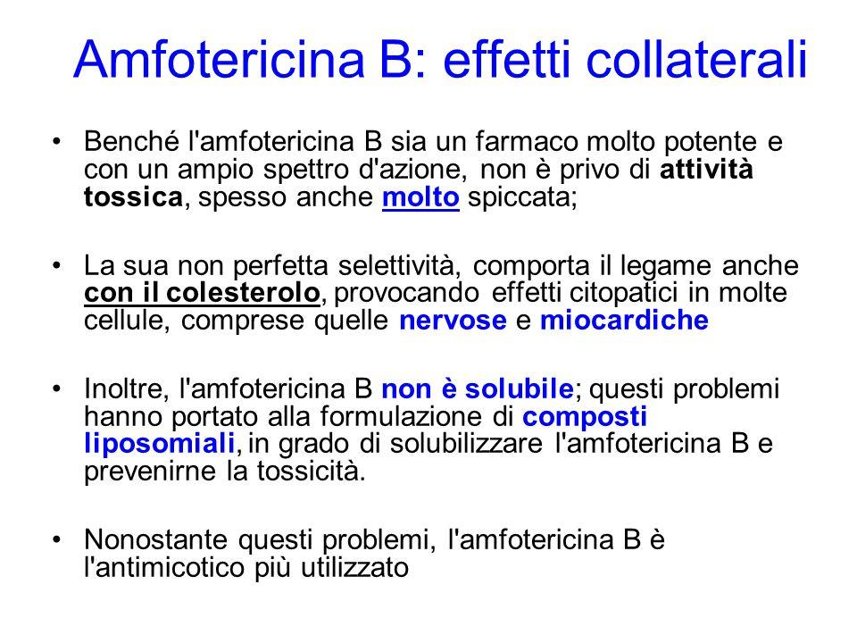 Amfotericina B: effetti collaterali Benché l amfotericina B sia un farmaco molto potente e con un ampio spettro d azione, non è privo di attività tossica, spesso anche molto spiccata; La sua non perfetta selettività, comporta il legame anche con il colesterolo, provocando effetti citopatici in molte cellule, comprese quelle nervose e miocardiche Inoltre, l amfotericina B non è solubile; questi problemi hanno portato alla formulazione di composti liposomiali, in grado di solubilizzare l amfotericina B e prevenirne la tossicità.