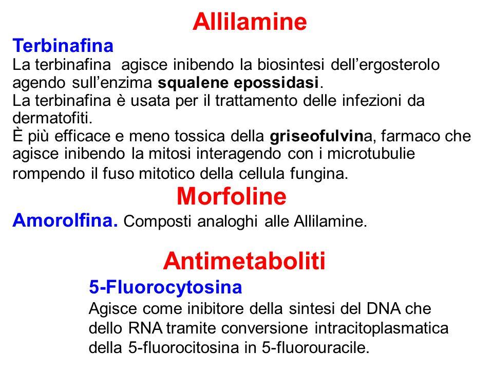 Allilamine Terbinafina La terbinafina agisce inibendo la biosintesi dell'ergosterolo agendo sull'enzima squalene epossidasi.