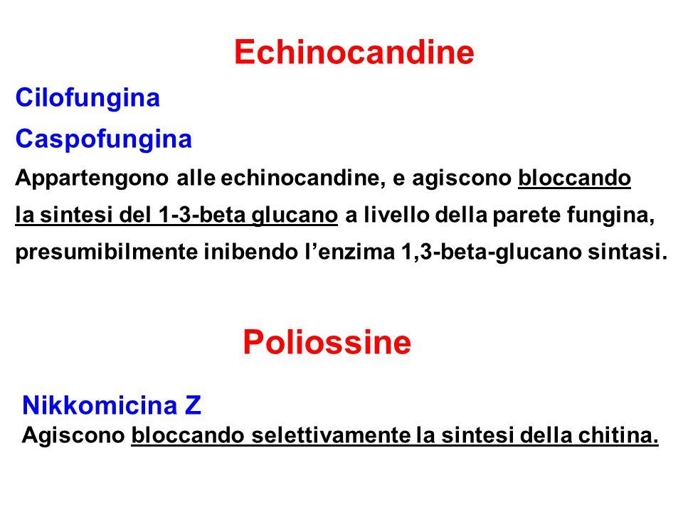 Echinocandine Cilofungina Caspofungina Appartengono alle echinocandine, e agiscono bloccando la sintesi del 1-3-beta glucano a livello della parete fungina, presumibilmente inibendo l'enzima 1,3-beta-glucano sintasi.