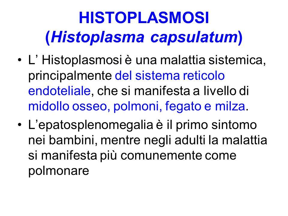HISTOPLASMOSI (Histoplasma capsulatum) L' Histoplasmosi è una malattia sistemica, principalmente del sistema reticolo endoteliale, che si manifesta a