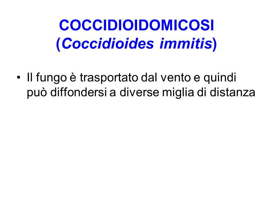 COCCIDIOIDOMICOSI (Coccidioides immitis) Il fungo è trasportato dal vento e quindi può diffondersi a diverse miglia di distanza
