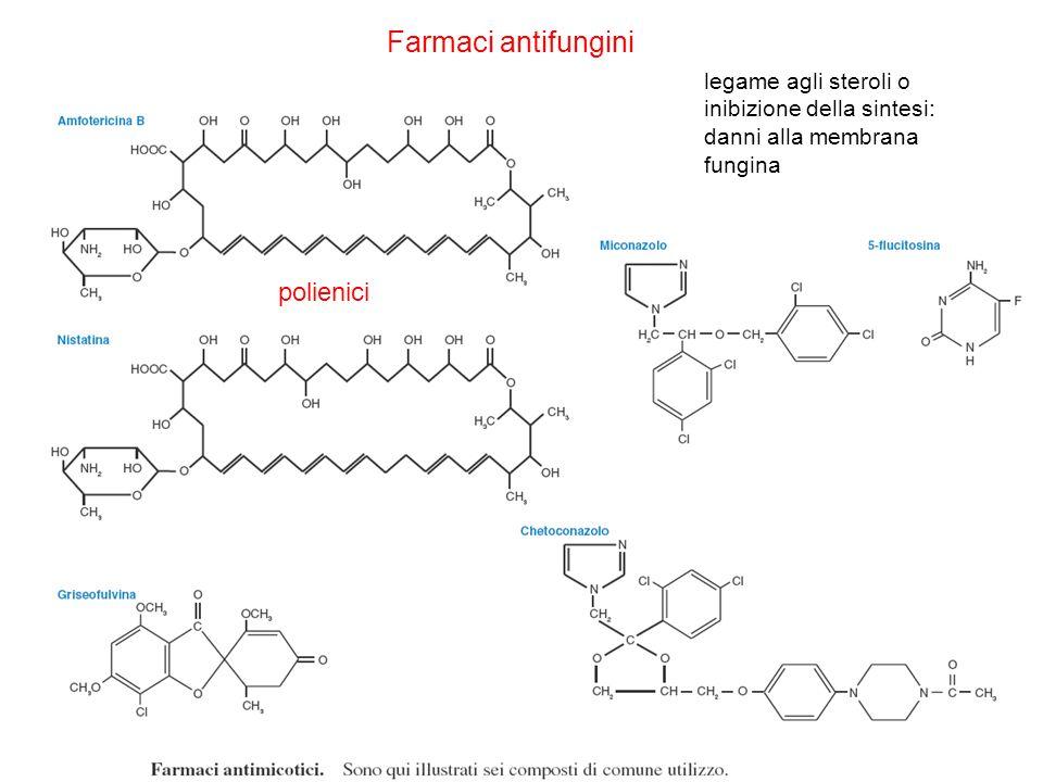 Farmaci antifungini polienici legame agli steroli o inibizione della sintesi: danni alla membrana fungina