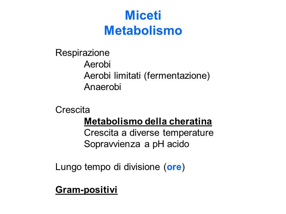 Miceti Metabolismo Respirazione Aerobi Aerobi limitati (fermentazione) Anaerobi Crescita Metabolismo della cheratina Crescita a diverse temperature So