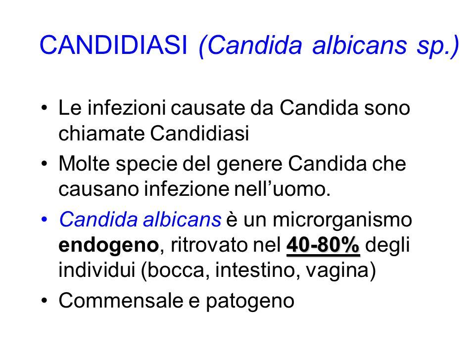 CANDIDIASI (Candida albicans sp.) Le infezioni causate da Candida sono chiamate Candidiasi Molte specie del genere Candida che causano infezione nell'