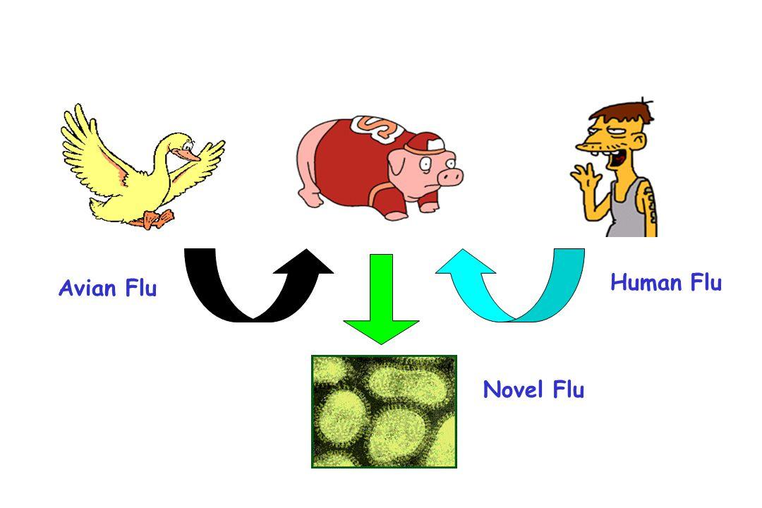 Avian Flu Human Flu Novel Flu