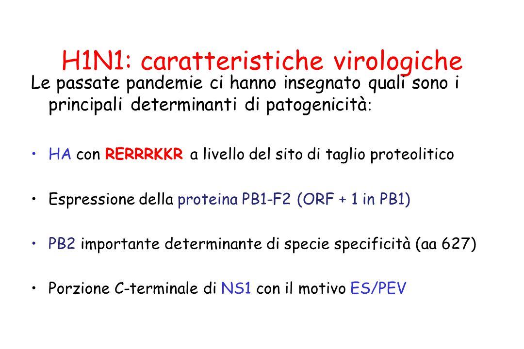 H1N1: caratteristiche virologiche Le passate pandemie ci hanno insegnato quali sono i principali determinanti di patogenicità : HA con RERRRKKR a live