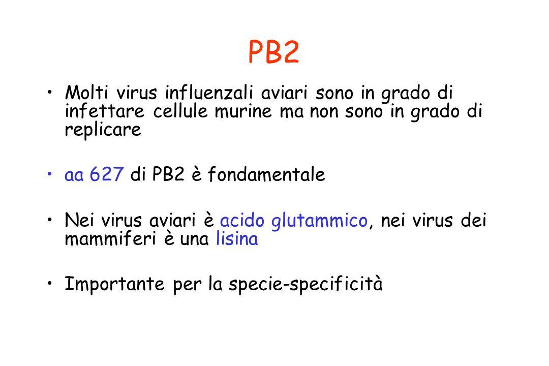 PB2 Molti virus influenzali aviari sono in grado di infettare cellule murine ma non sono in grado di replicare aa 627 di PB2 è fondamentale Nei virus