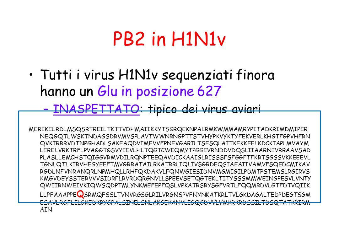 PB2 in H1N1v Tutti i virus H1N1v sequenziati finora hanno un Glu in posizione 627 –INASPETTATO: tipico dei virus aviari MERIKELRDLMSQSRTREILTKTTVDHMAI