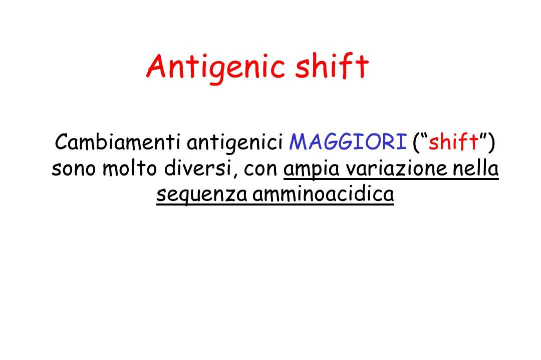 """Cambiamenti antigenici MAGGIORI (""""shift"""") sono molto diversi, con ampia variazione nella sequenza amminoacidica Antigenic shift"""