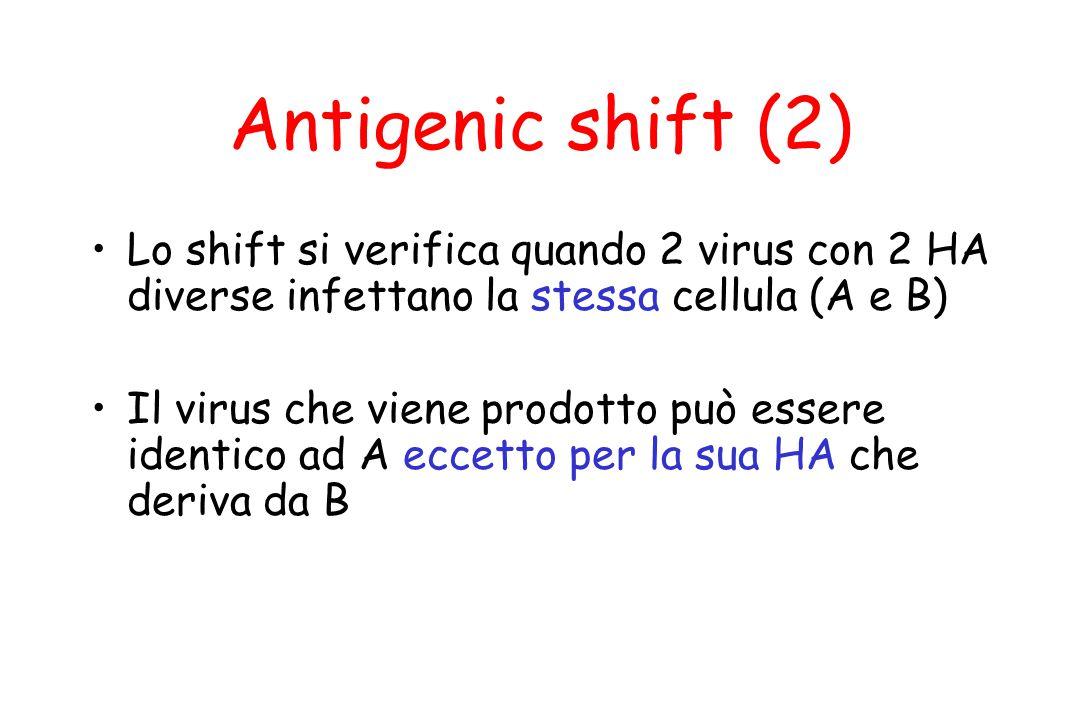 Antigenic shift (2) Lo shift si verifica quando 2 virus con 2 HA diverse infettano la stessa cellula (A e B) Il virus che viene prodotto può essere id