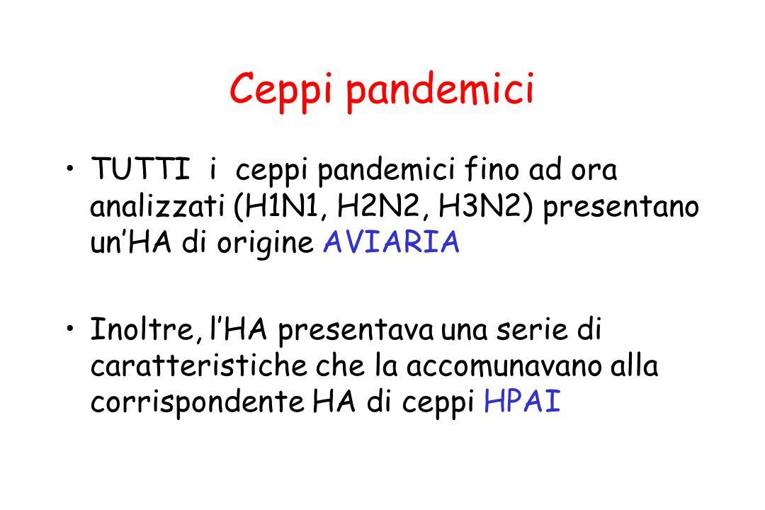 Ceppi pandemici TUTTI i ceppi pandemici fino ad ora analizzati (H1N1, H2N2, H3N2) presentano un'HA di origine AVIARIA Inoltre, l'HA presentava una ser