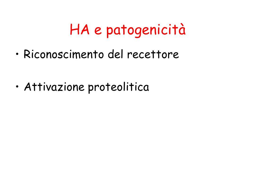 Riconoscimento del recettore Attivazione proteolitica HA e patogenicità