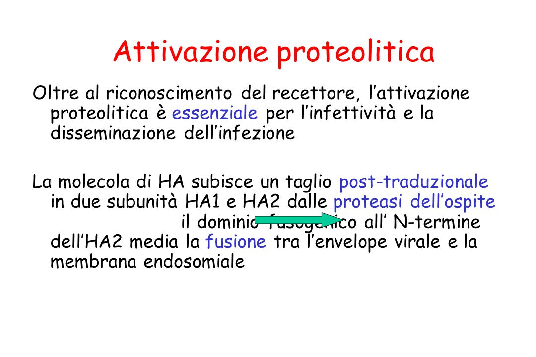 Attivazione proteolitica Oltre al riconoscimento del recettore, l'attivazione proteolitica è essenziale per l'infettività e la disseminazione dell'inf