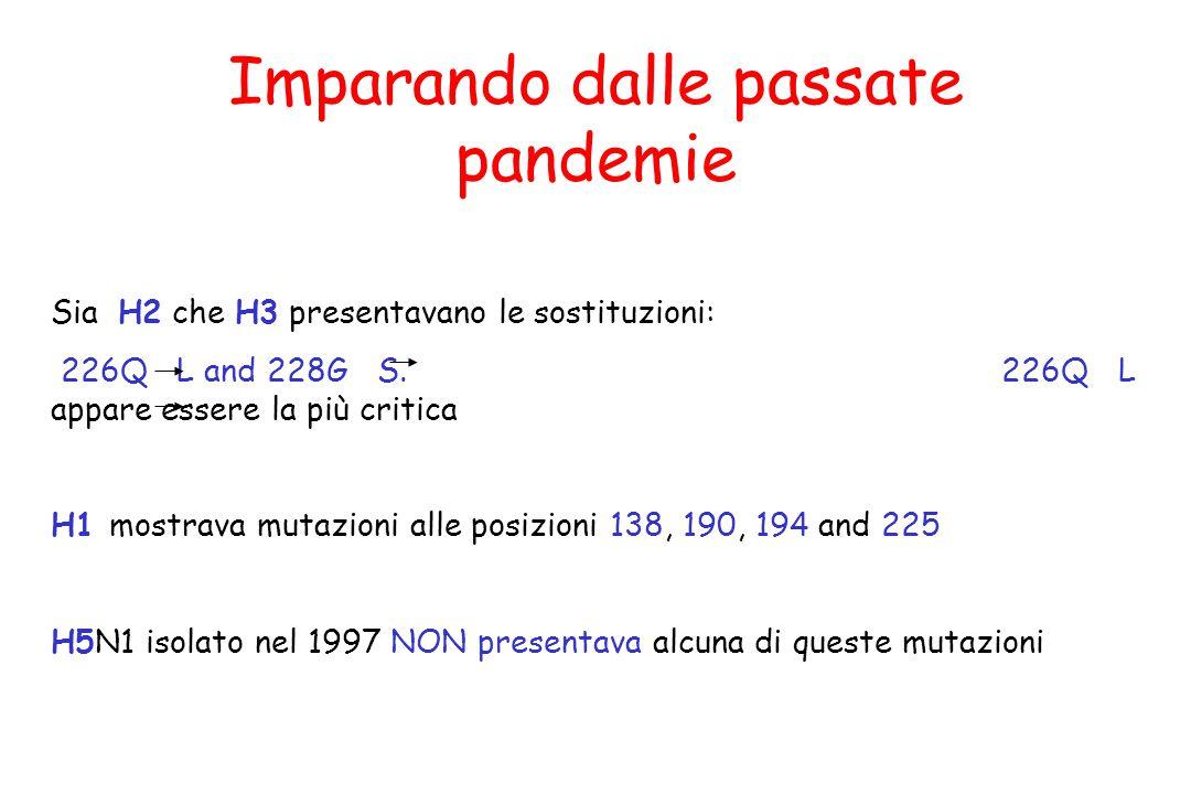 Imparando dalle passate pandemie Sia H2 che H3 presentavano le sostituzioni: 226Q L and 228G S. 226Q L appare essere la più critica H1 mostrava mutazi