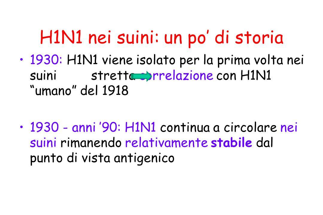 """H1N1 nei suini: un po' di storia 1930: H1N1 viene isolato per la prima volta nei suini stretta correlazione con H1N1 """"umano"""" del 1918 1930 - anni '90:"""