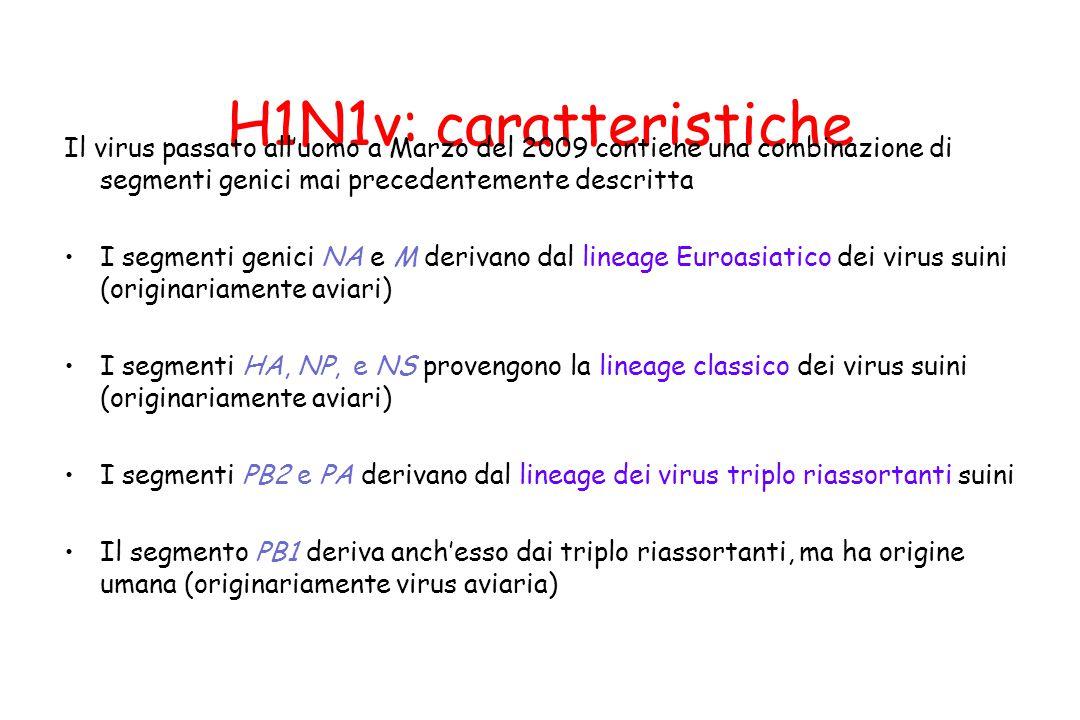 H1N1v: caratteristiche Il virus passato all'uomo a Marzo del 2009 contiene una combinazione di segmenti genici mai precedentemente descritta I segment