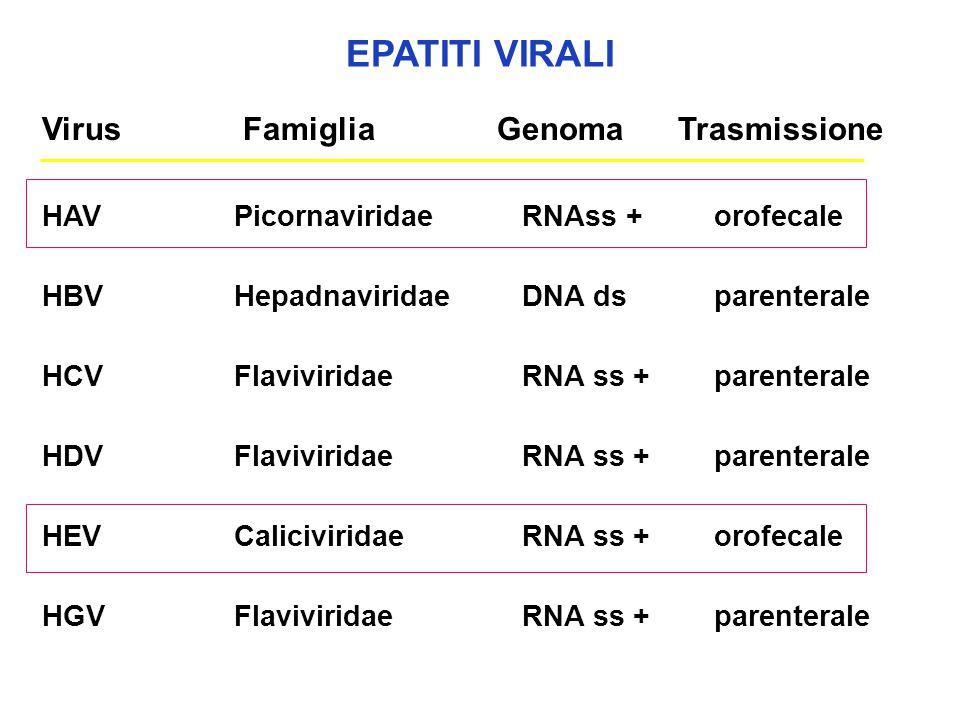 EPATITI VIRALI HAVPicornaviridaeRNAss +orofecale HBVHepadnaviridaeDNA dsparenterale HCVFlaviviridaeRNA ss +parenterale HDVFlaviviridae RNA ss +parente