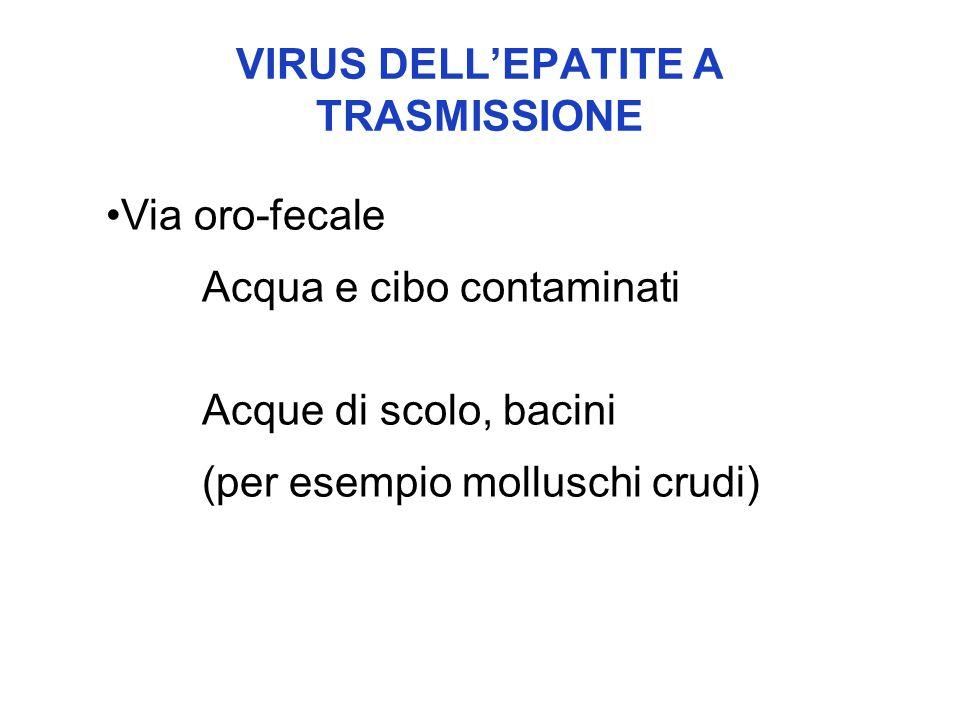 VIRUS DELL'EPATITE A TRASMISSIONE Via oro-fecale Acqua e cibo contaminati Acque di scolo, bacini (per esempio molluschi crudi)