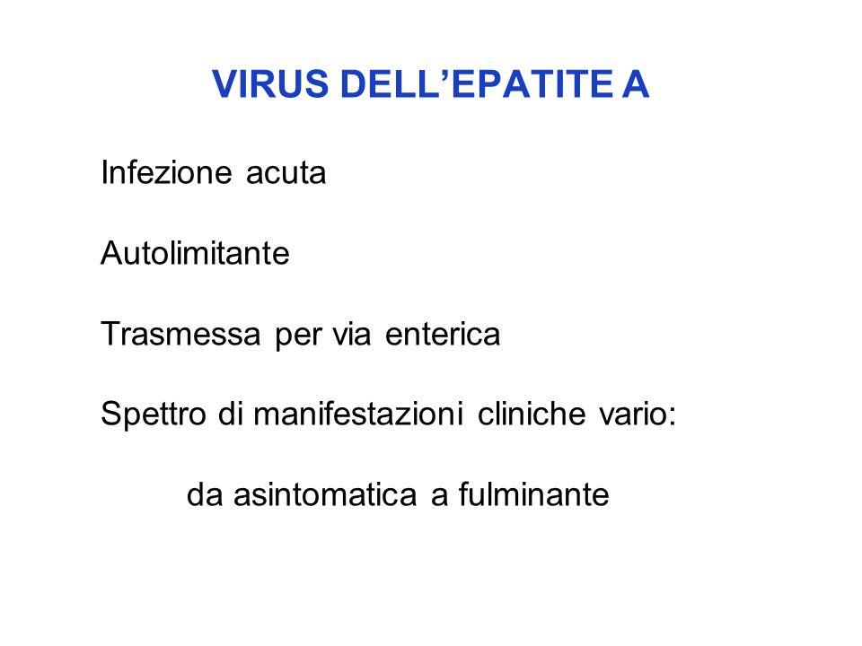 VIRUS DELL'EPATITE A Infezione acuta Autolimitante Trasmessa per via enterica Spettro di manifestazioni cliniche vario: da asintomatica a fulminante
