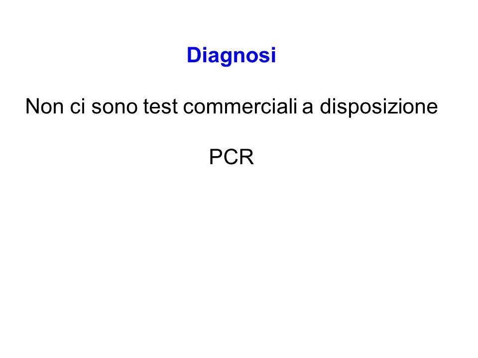Diagnosi Non ci sono test commerciali a disposizione PCR
