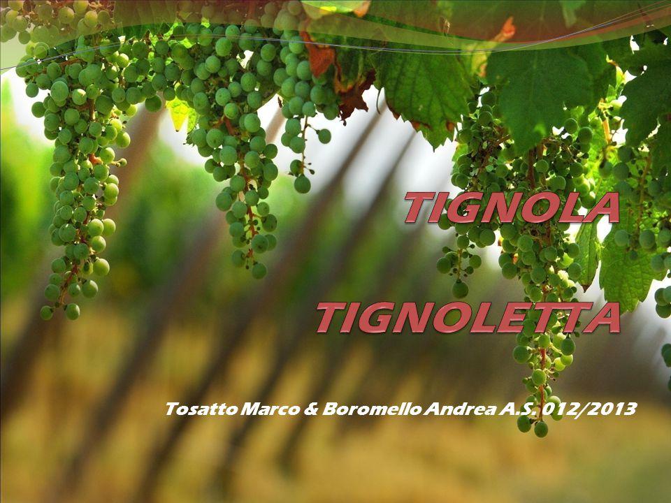 Tosatto Marco & Boromello Andrea A.S. 012/2013