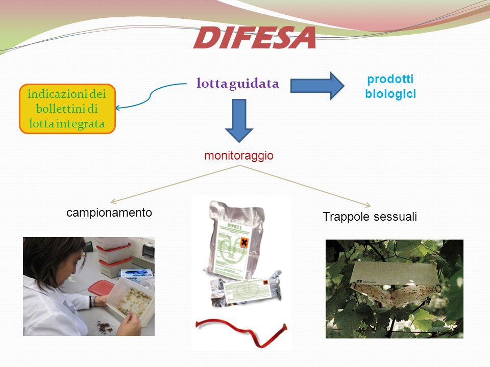 lotta guidata DIFESA monitoraggio campionamento Trappole sessuali indicazioni dei bollettini di lotta integrata prodotti biologici