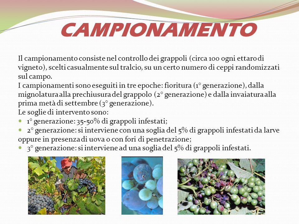 CAMPIONAMENTO Il campionamento consiste nel controllo dei grappoli (circa 100 ogni ettaro di vigneto), scelti casualmente sul tralcio, su un certo num